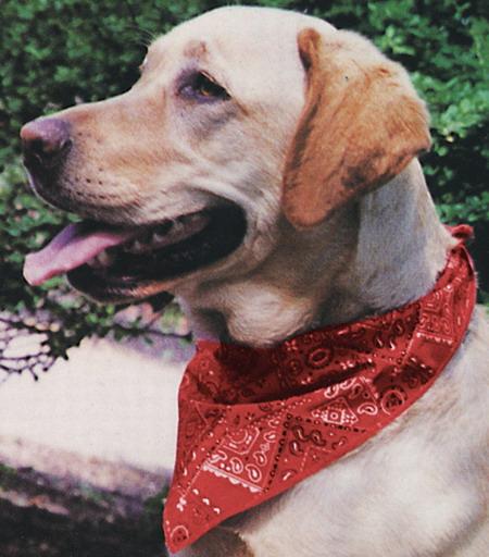 Miracool cooling Doggie bandana